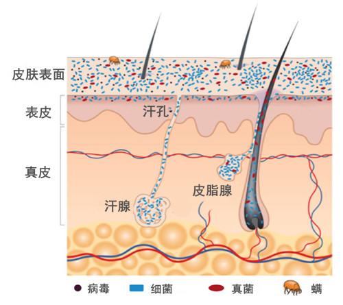 伊的家护肤品怎么样?解读微生态护肤